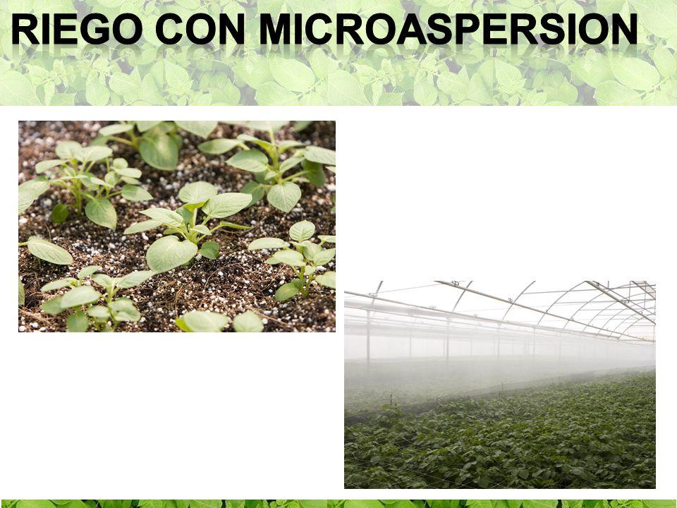 Riego con microaspersion