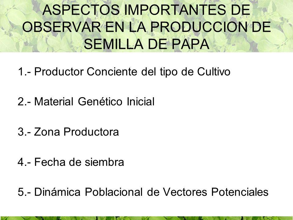 ASPECTOS IMPORTANTES DE OBSERVAR EN LA PRODUCCION DE SEMILLA DE PAPA