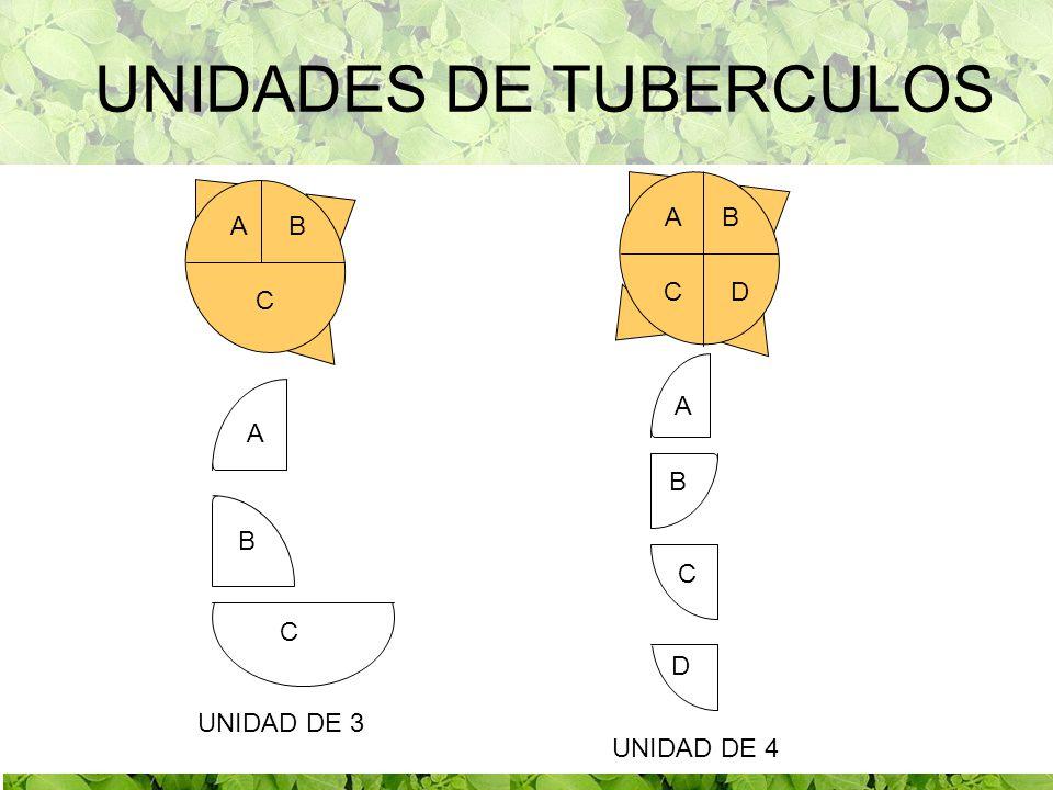 UNIDADES DE TUBERCULOS