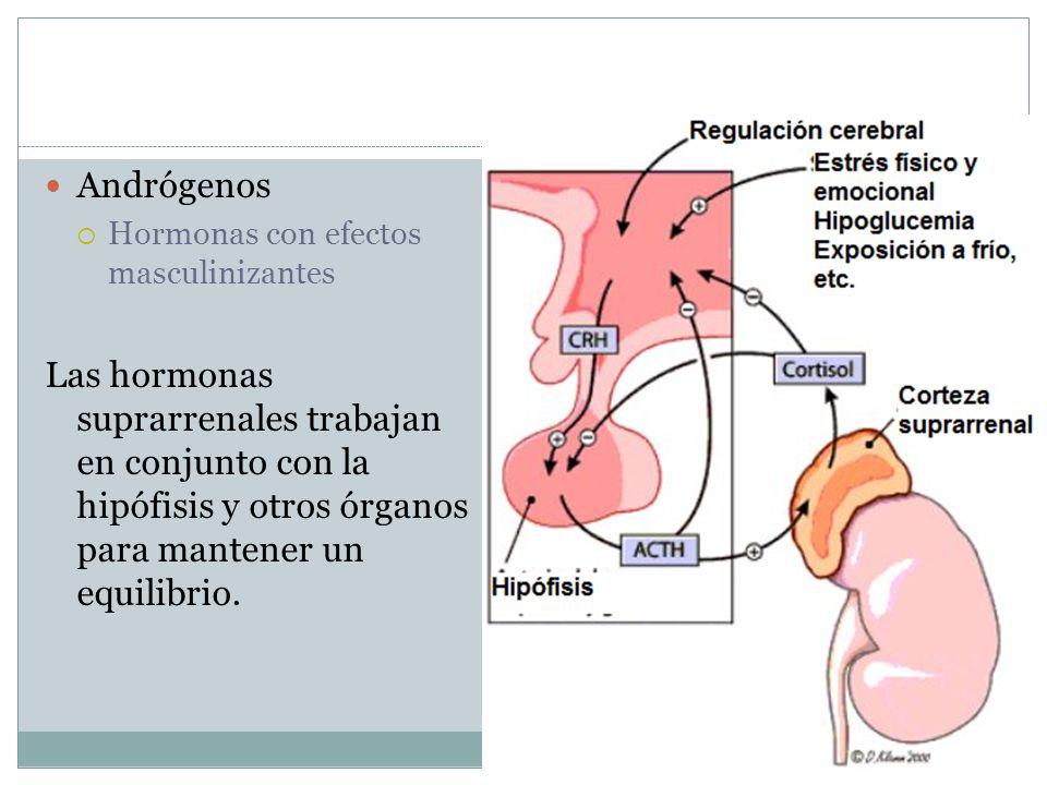 Andrógenos Hormonas con efectos masculinizantes.