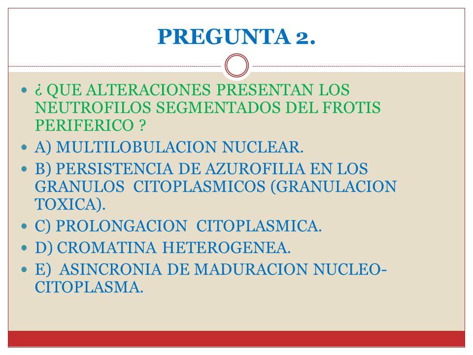 PREGUNTA 2. ¿ QUE ALTERACIONES PRESENTAN LOS NEUTROFILOS SEGMENTADOS DEL FROTIS PERIFERICO A) MULTILOBULACION NUCLEAR.