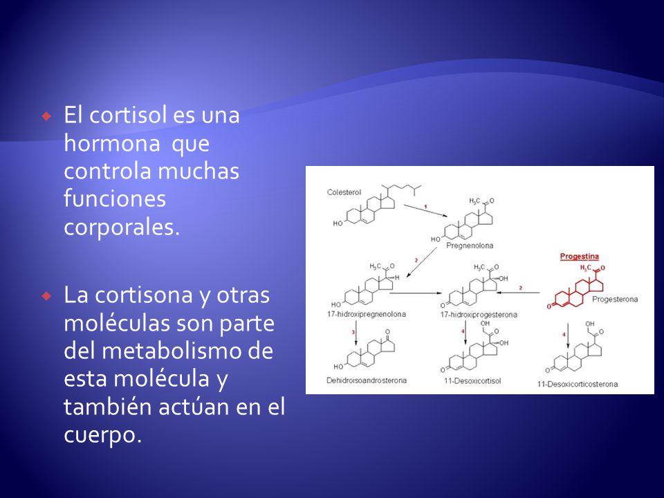 El cortisol es una hormona que controla muchas funciones corporales.