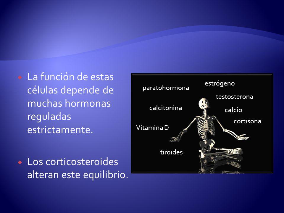 Los corticosteroides alteran este equilibrio.