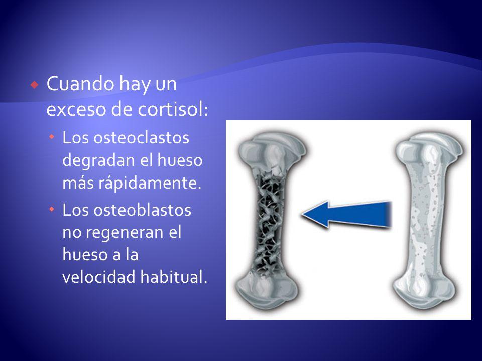 Cuando hay un exceso de cortisol: