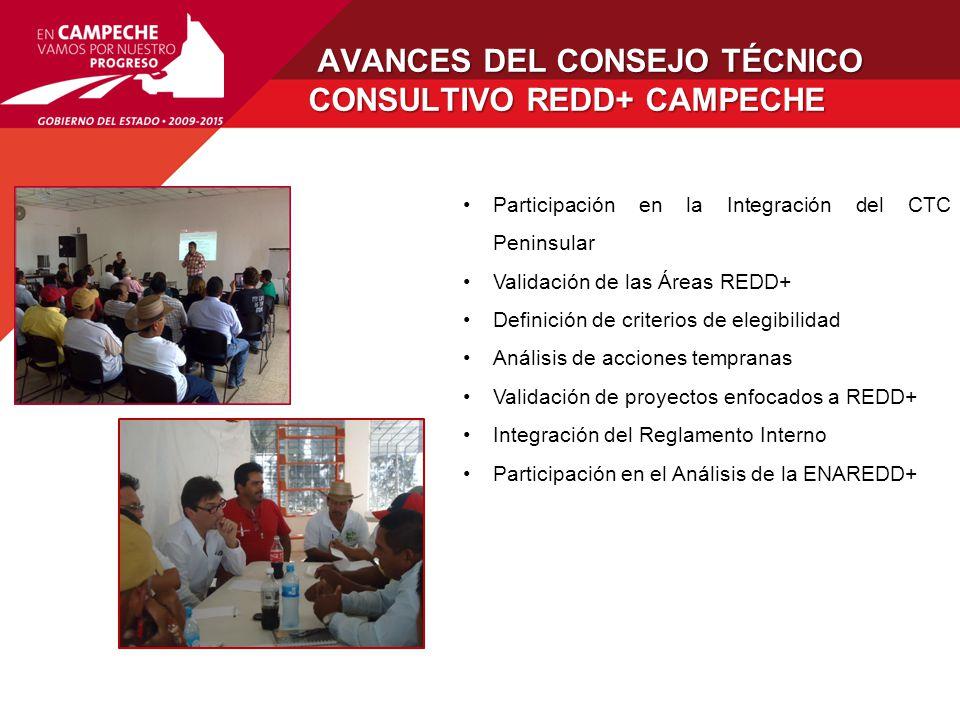 AVANCES DEL CONSEJO TÉCNICO CONSULTIVO REDD+ CAMPECHE
