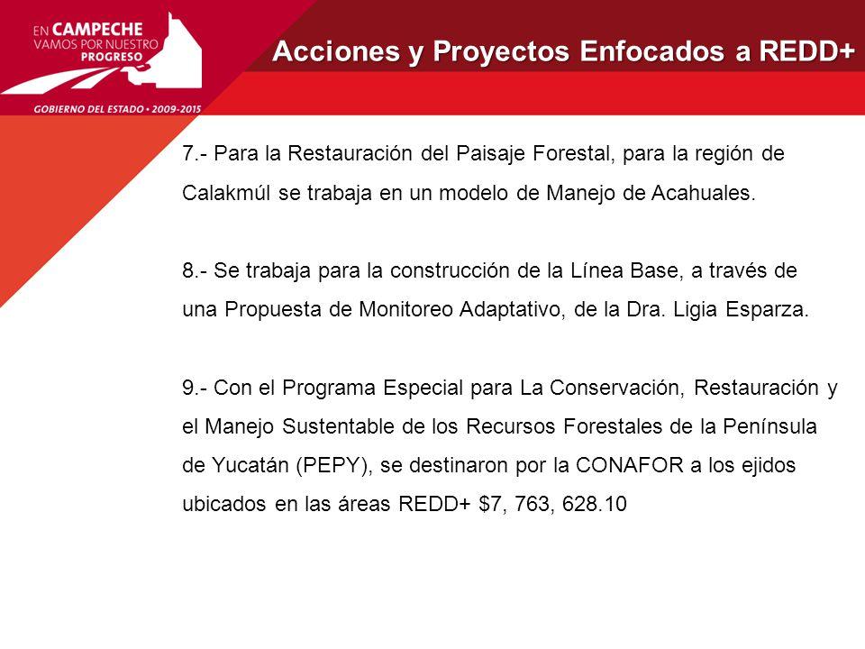 Acciones y Proyectos Enfocados a REDD+