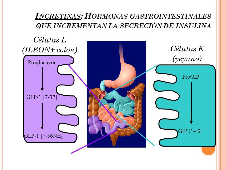 Incretinas: Hormonas gastrointestinales que incrementan la secreción de insulina