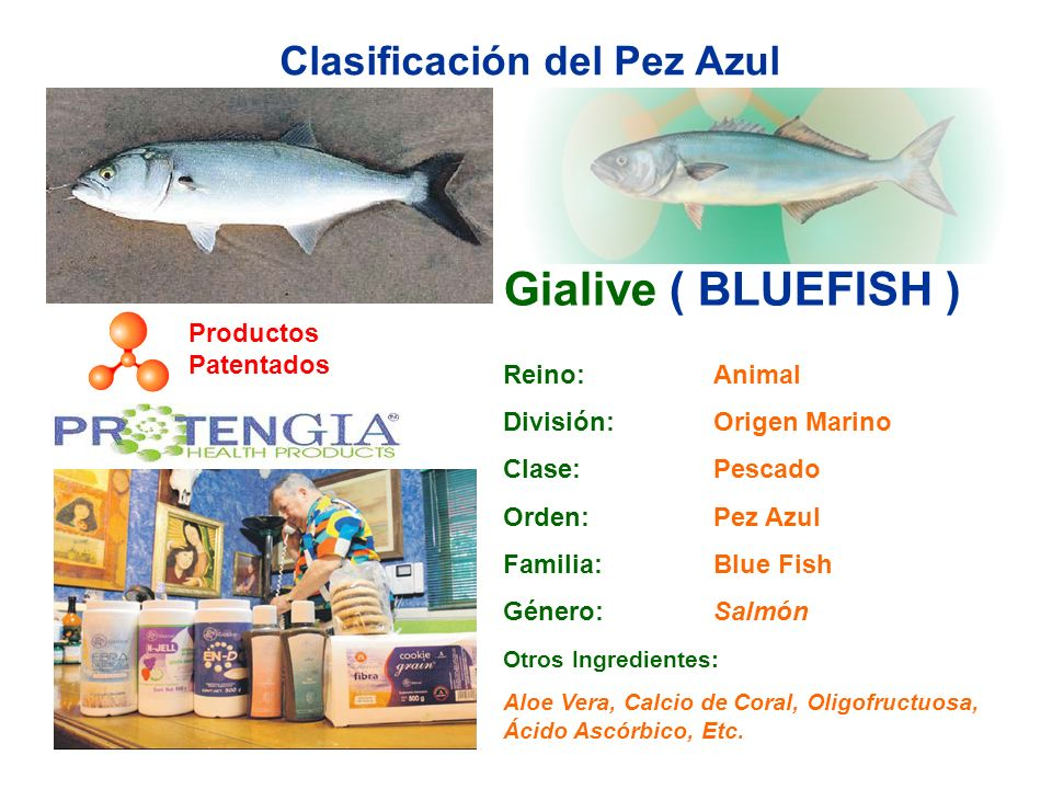Clasificación del Pez Azul