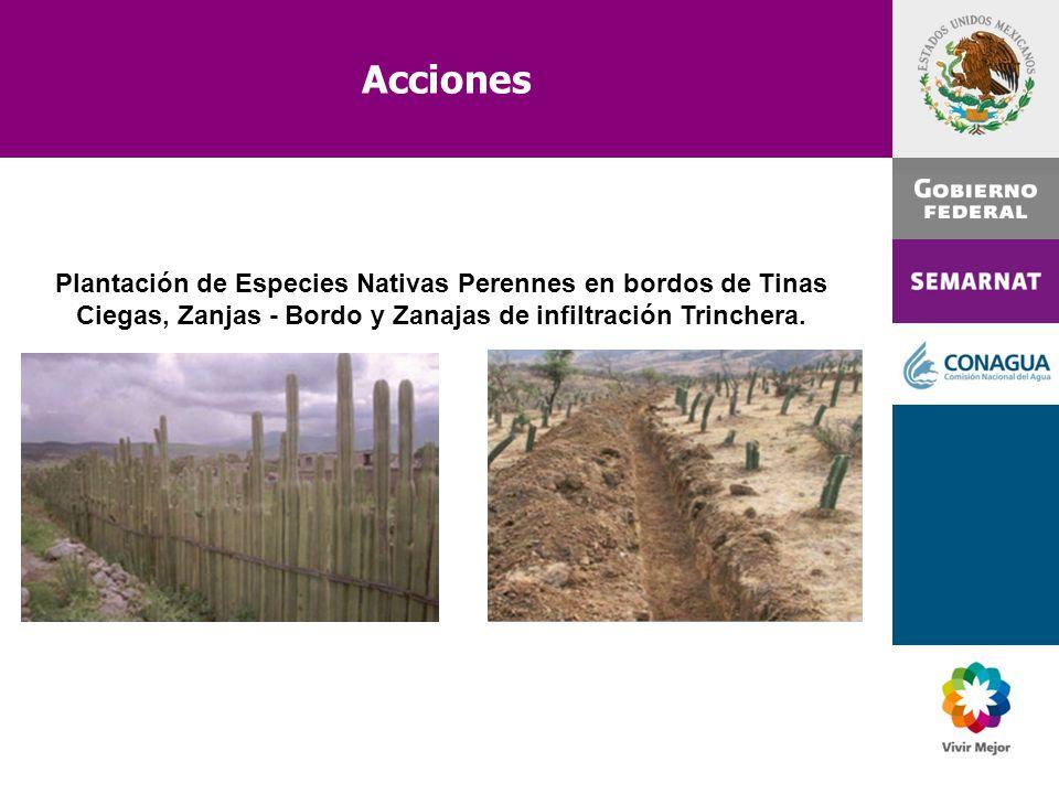 Acciones Plantación de Especies Nativas Perennes en bordos de Tinas Ciegas, Zanjas - Bordo y Zanajas de infiltración Trinchera.