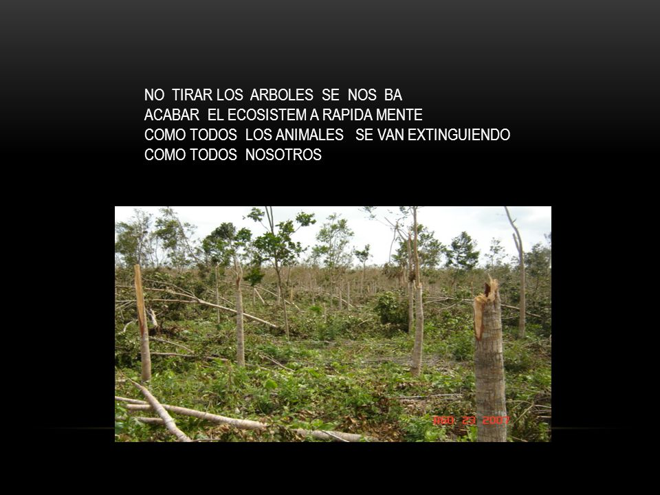 NO TIRAR LOS ARBOLES SE NOS BA