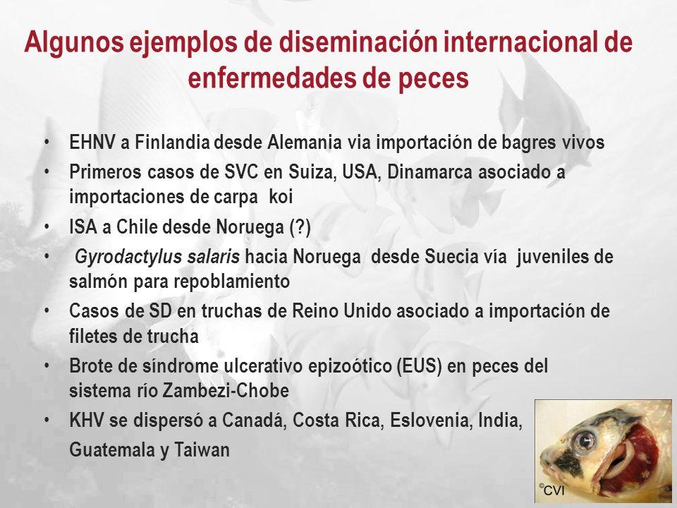 Algunos ejemplos de diseminación internacional de enfermedades de peces
