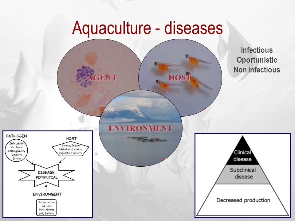 Aquaculture - diseases