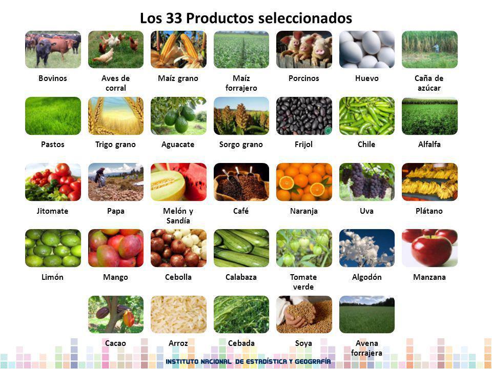 Los 33 Productos seleccionados