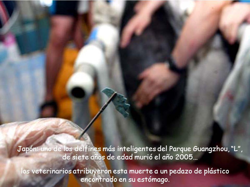 Japón: uno de los delfines más inteligentes del Parque Guangzhou, L , de siete años de edad murió el año 2005…