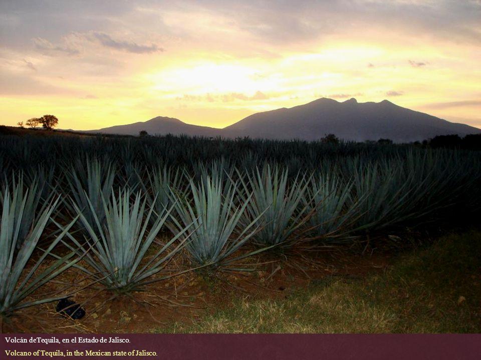 Volcán deTequila, en el Estado de Jalisco.