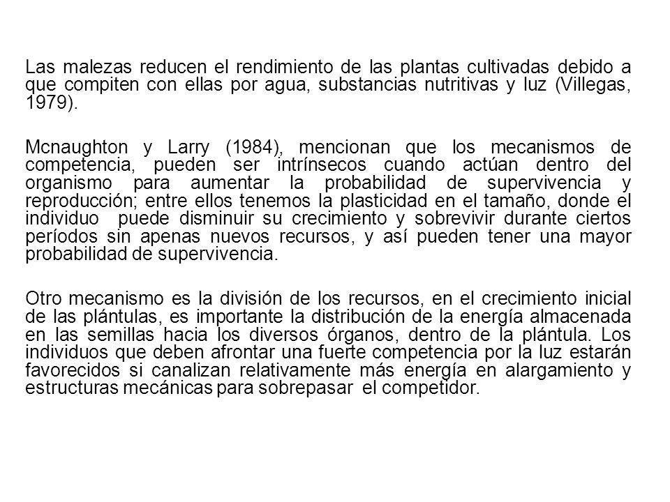 Las malezas reducen el rendimiento de las plantas cultivadas debido a que compiten con ellas por agua, substancias nutritivas y luz (Villegas, 1979).