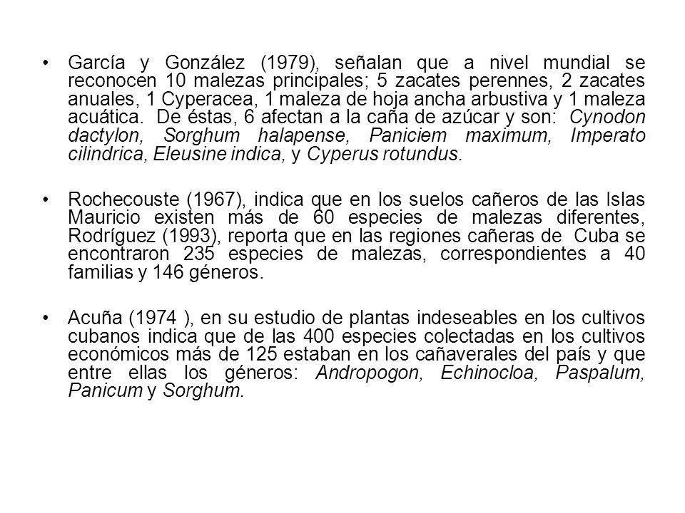 García y González (1979), señalan que a nivel mundial se reconocen 10 malezas principales; 5 zacates perennes, 2 zacates anuales, 1 Cyperacea, 1 maleza de hoja ancha arbustiva y 1 maleza acuática. De éstas, 6 afectan a la caña de azúcar y son: Cynodon dactylon, Sorghum halapense, Paniciem maximum, Imperato cilindrica, Eleusine indica, y Cyperus rotundus.