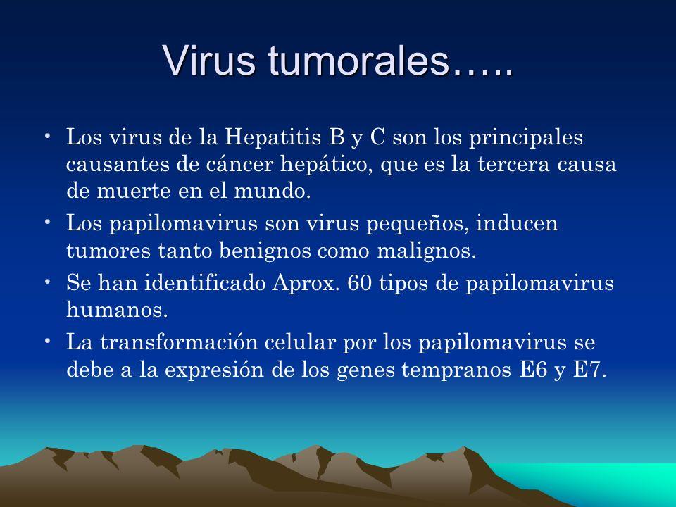 Virus tumorales….. Los virus de la Hepatitis B y C son los principales causantes de cáncer hepático, que es la tercera causa de muerte en el mundo.