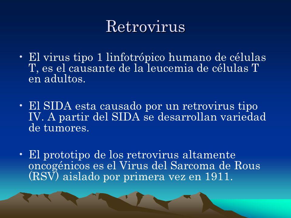 Retrovirus El virus tipo 1 linfotrópico humano de células T, es el causante de la leucemia de células T en adultos.