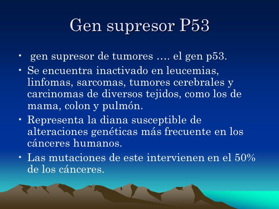 Gen supresor P53 gen supresor de tumores …. el gen p53.