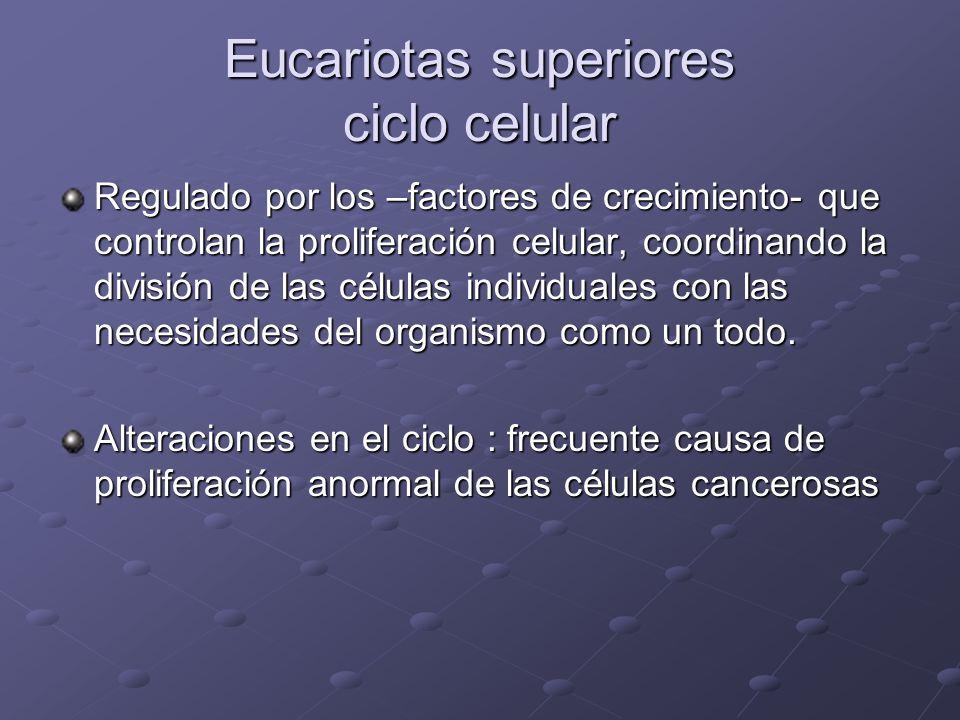 Eucariotas superiores ciclo celular
