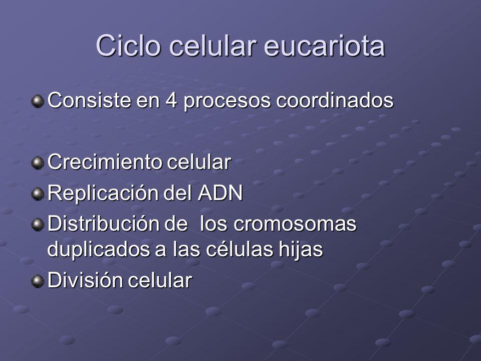Ciclo celular eucariota