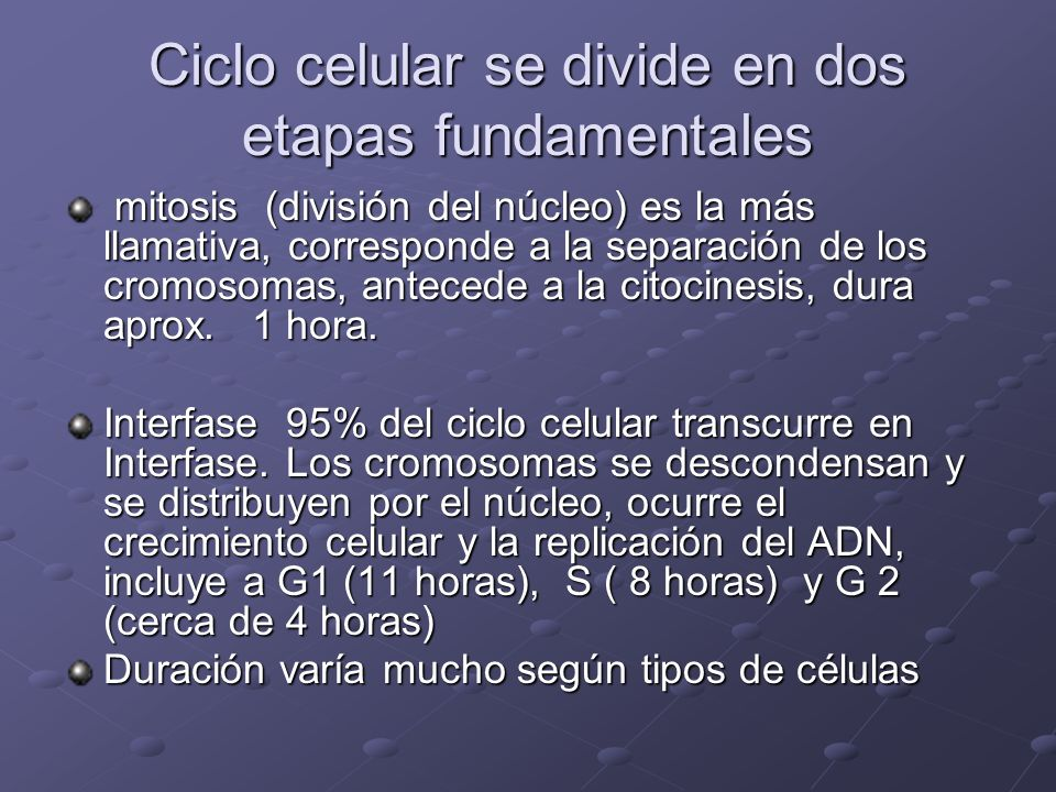 Ciclo celular se divide en dos etapas fundamentales