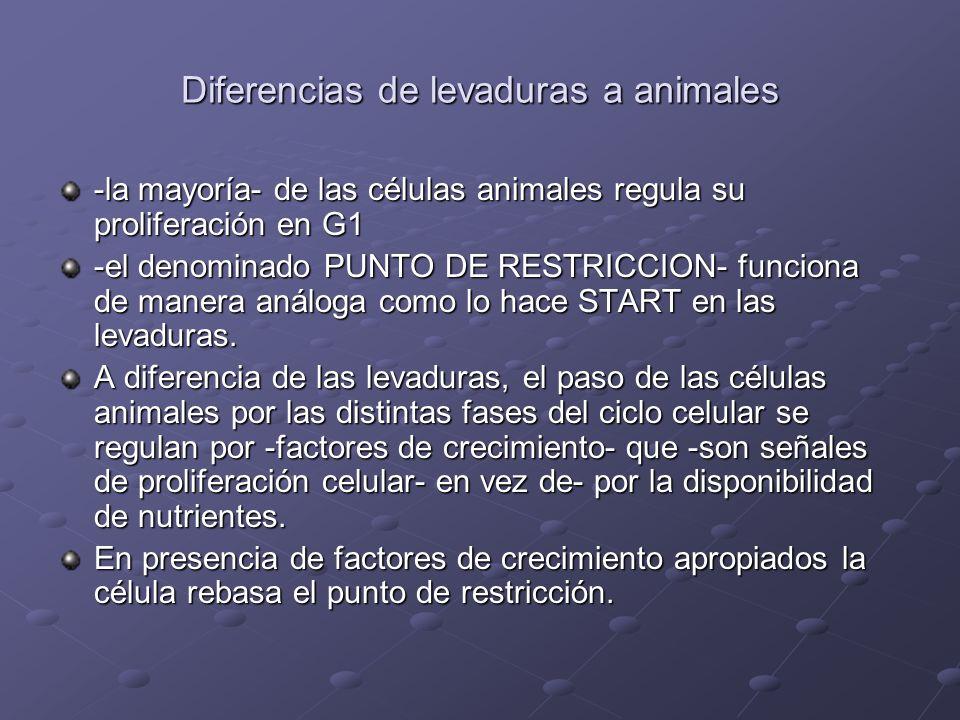 Diferencias de levaduras a animales