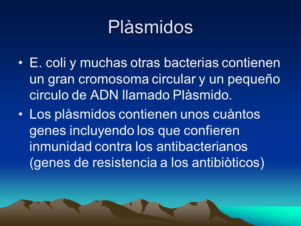 PlàsmidosE. coli y muchas otras bacterias contienen un gran cromosoma circular y un pequeño circulo de ADN llamado Plàsmido.