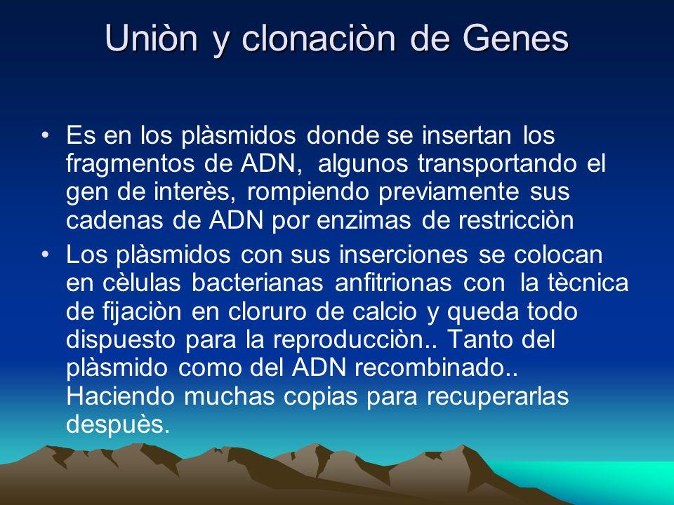 Uniòn y clonaciòn de Genes