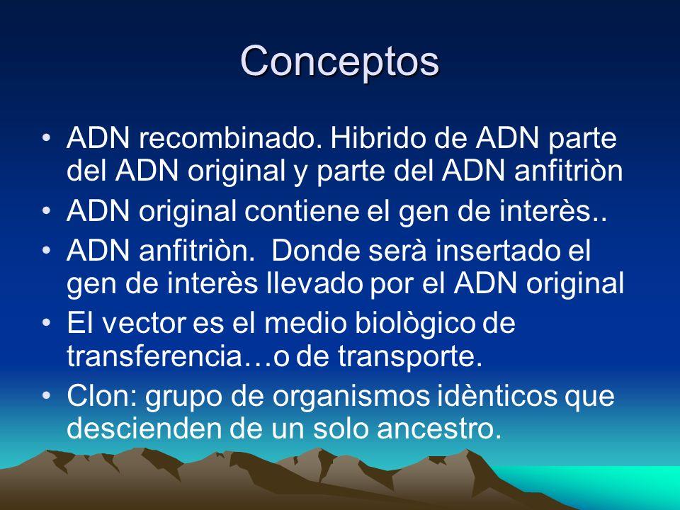 Conceptos ADN recombinado. Hibrido de ADN parte del ADN original y parte del ADN anfitriòn. ADN original contiene el gen de interès..