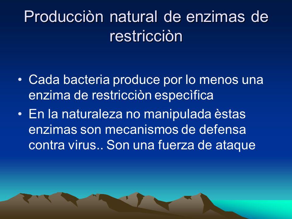 Producciòn natural de enzimas de restricciòn