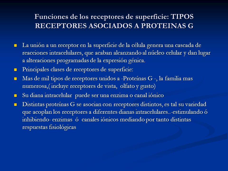 Funciones de los receptores de superficie: TIPOS RECEPTORES ASOCIADOS A PROTEINAS G