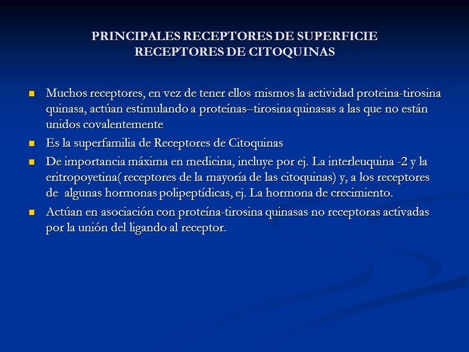 PRINCIPALES RECEPTORES DE SUPERFICIE RECEPTORES DE CITOQUINAS