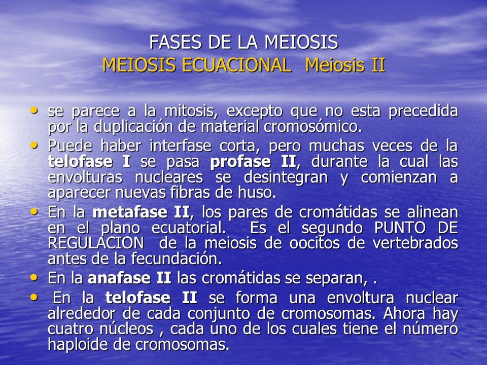 FASES DE LA MEIOSIS MEIOSIS ECUACIONAL Meiosis II