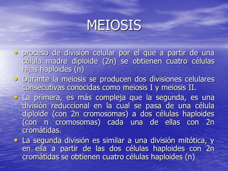 MEIOSIS proceso de división celular por el que a partir de una célula madre diploide (2n) se obtienen cuatro células hijas haploides (n)