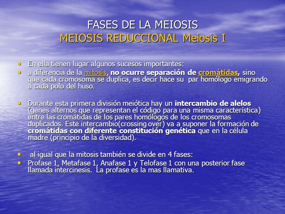 FASES DE LA MEIOSIS MEIOSIS REDUCCIONAL Meiosis I
