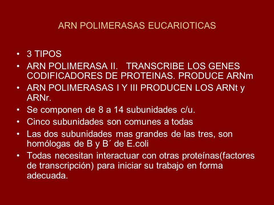 ARN POLIMERASAS EUCARIOTICAS