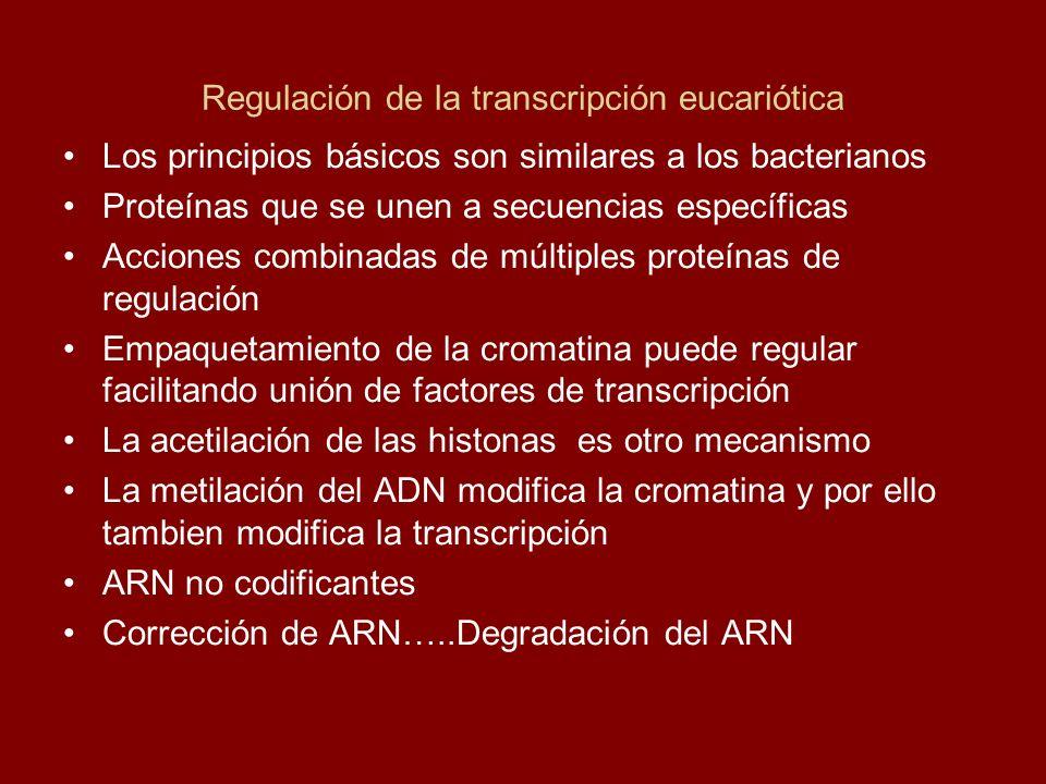 Regulación de la transcripción eucariótica