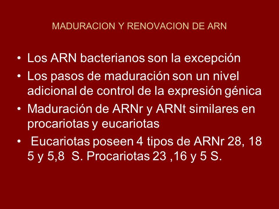 MADURACION Y RENOVACION DE ARN
