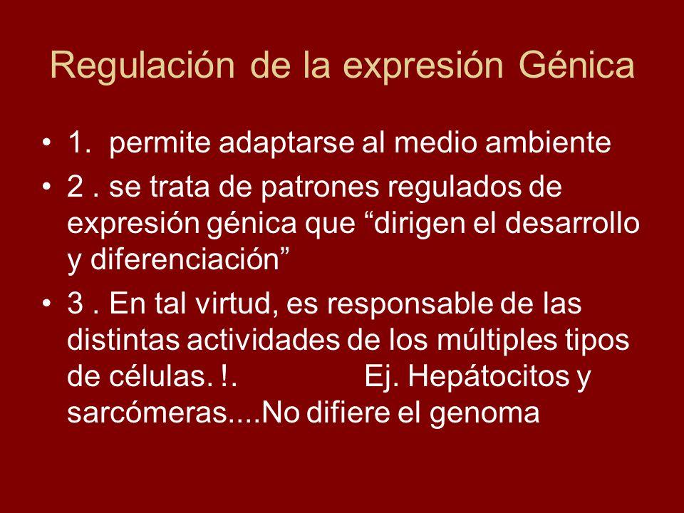 Regulación de la expresión Génica