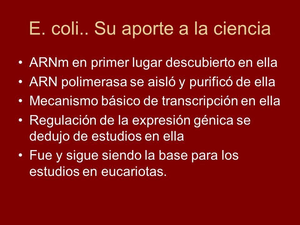 E. coli.. Su aporte a la ciencia