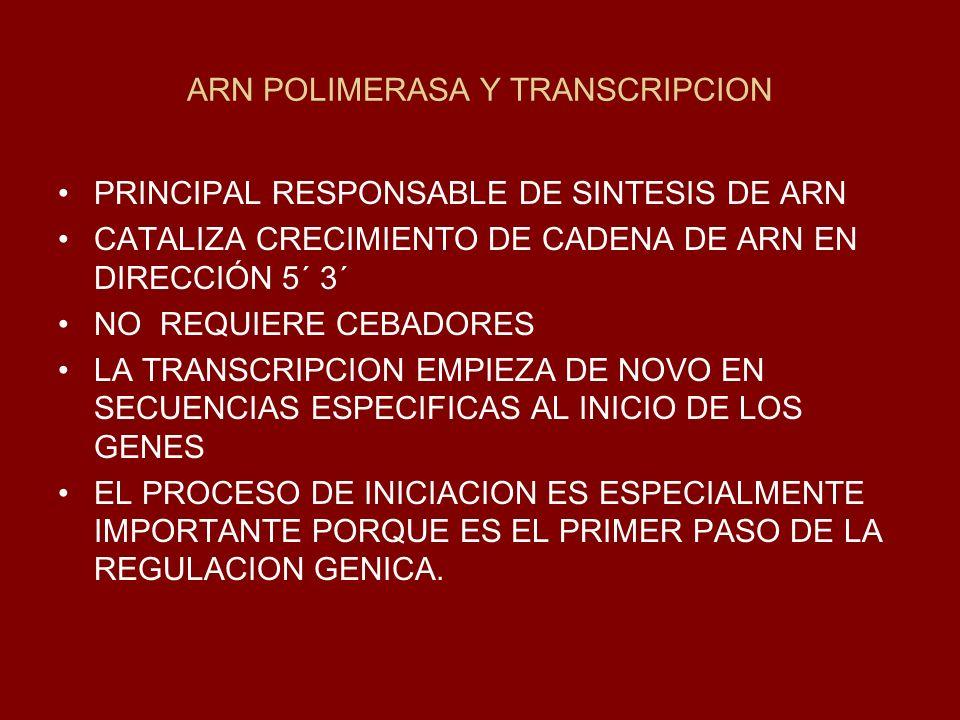 ARN POLIMERASA Y TRANSCRIPCION