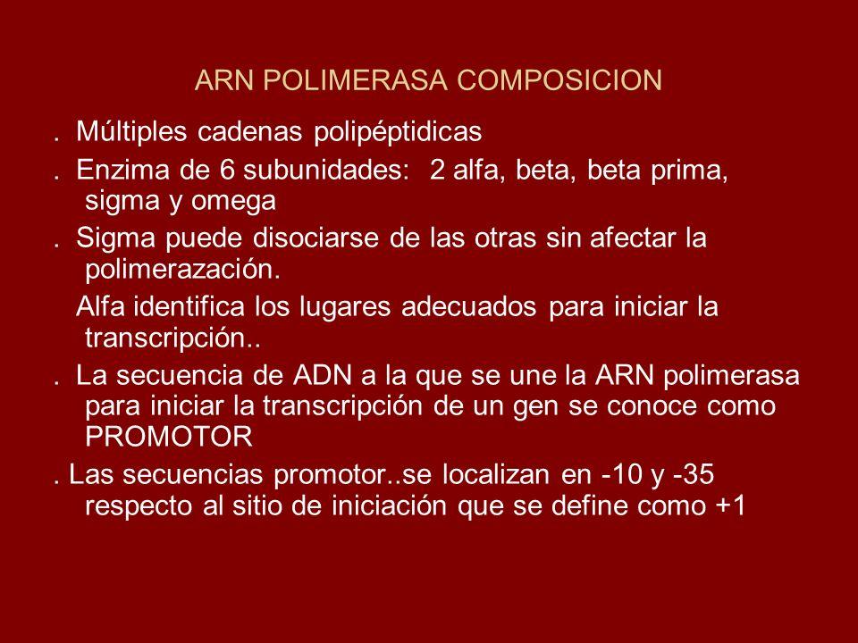 ARN POLIMERASA COMPOSICION