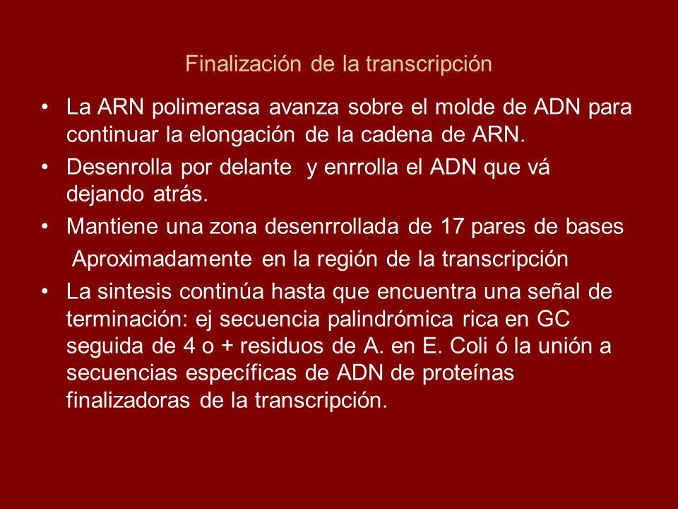 Finalización de la transcripción