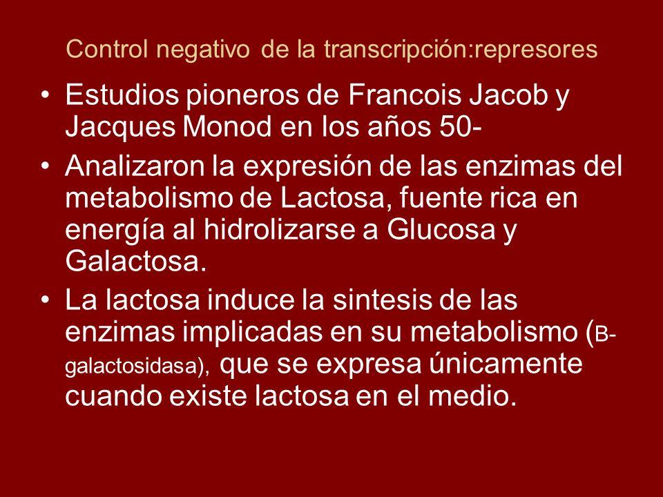 Control negativo de la transcripción:represores