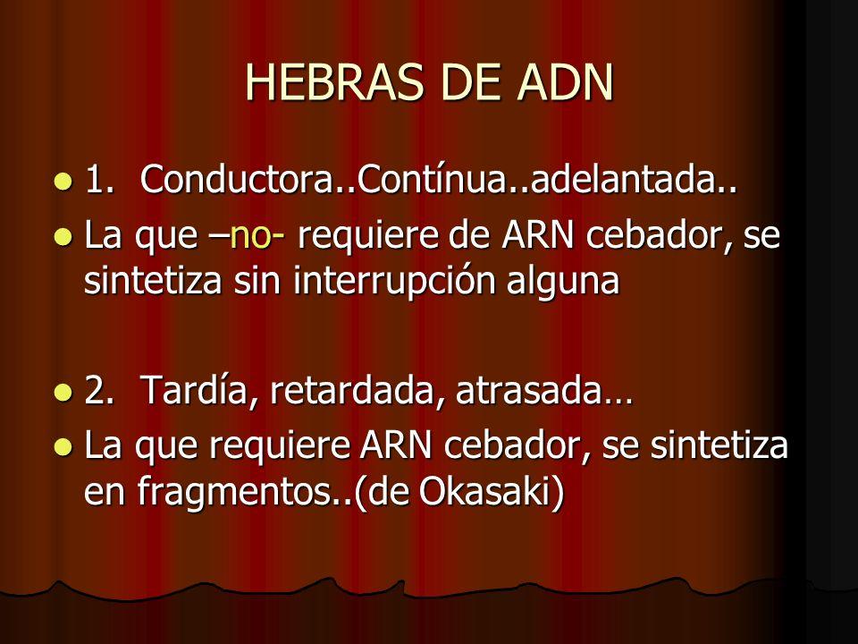 HEBRAS DE ADN 1. Conductora..Contínua..adelantada..