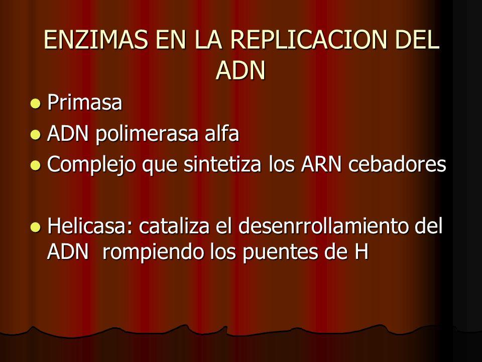 ENZIMAS EN LA REPLICACION DEL ADN