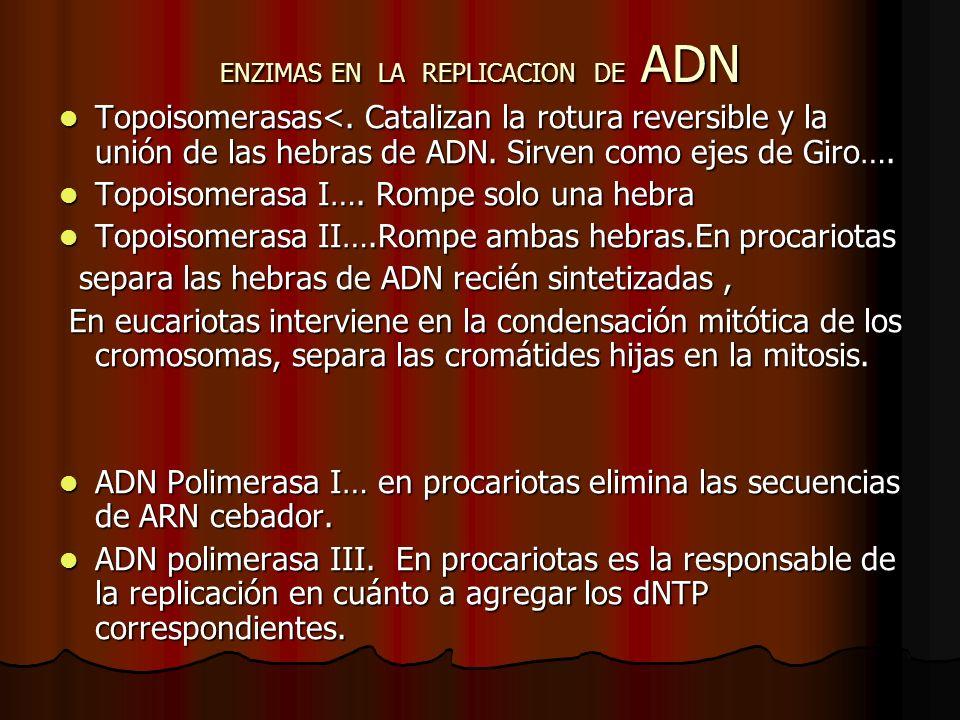 ENZIMAS EN LA REPLICACION DE ADN