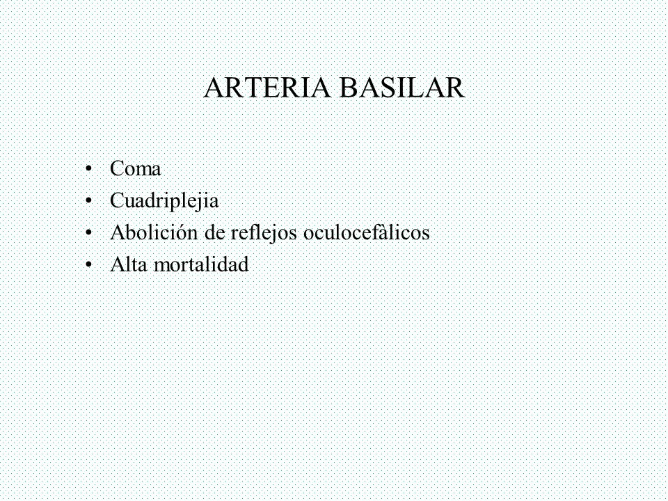 ARTERIA BASILAR Coma Cuadriplejia Abolición de reflejos oculocefàlicos